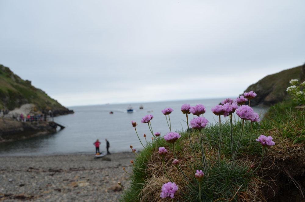 Pembroke coast 5